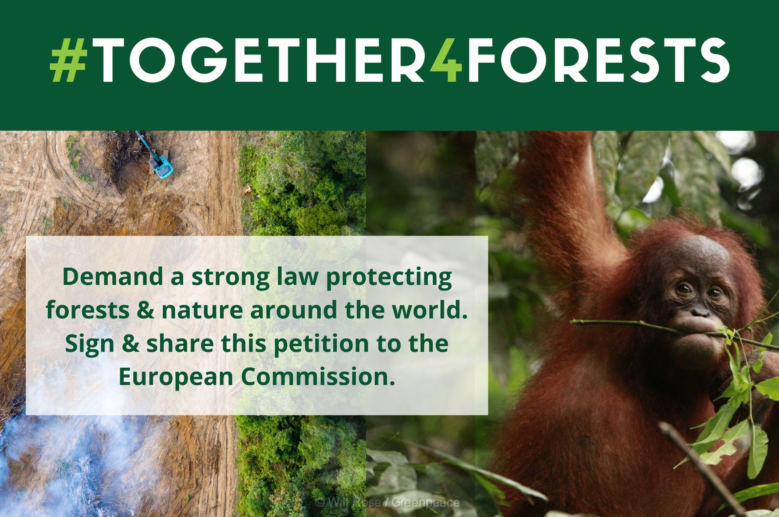 Together4Forest